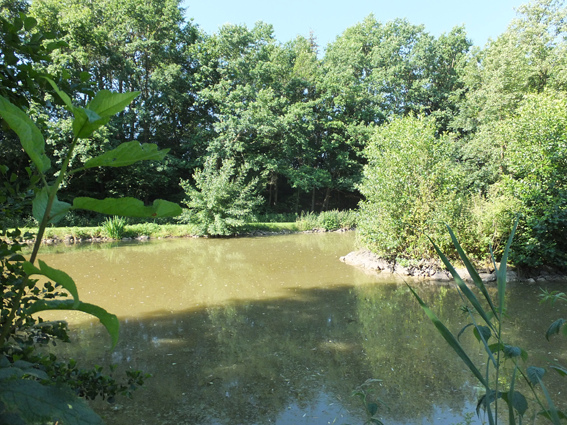 Teich Kaufen teichanlage zu verkaufen